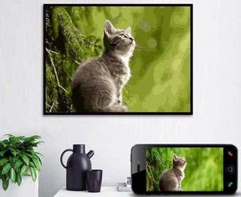 Malen nach Zahlen Wunschmotiv Haustiere - Hund - Katze - Pferd