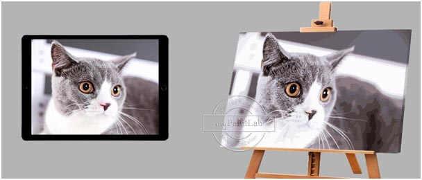 Malen nach Zahlen Wunschmotiv für Katzen