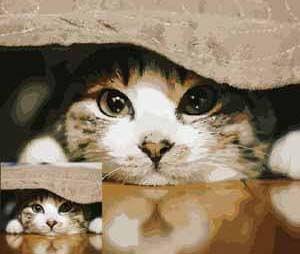 Haustiere - Hund - Katze - Pferd