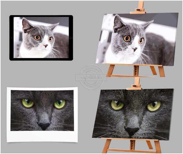 Custom DIY Paint by Numbers - Pets