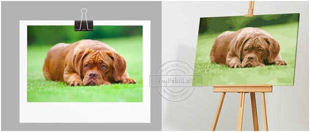 Custom Paint by Numbers from your own photos – dogs photos
