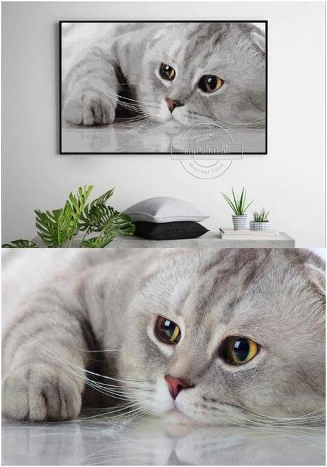 Malen nach zahlen vom Foto - Haustier